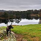 Tarn at Tarn Hows by Jamie  Green