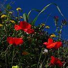 Wild Flowers, Blue Sky by wiggyofipswich