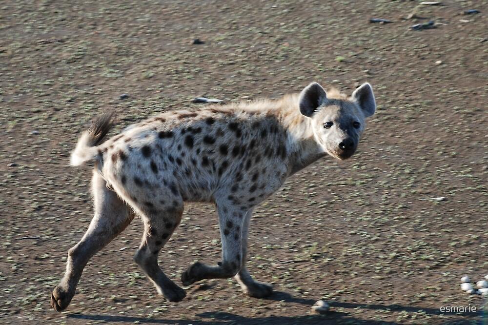 Hyena  by esmarie