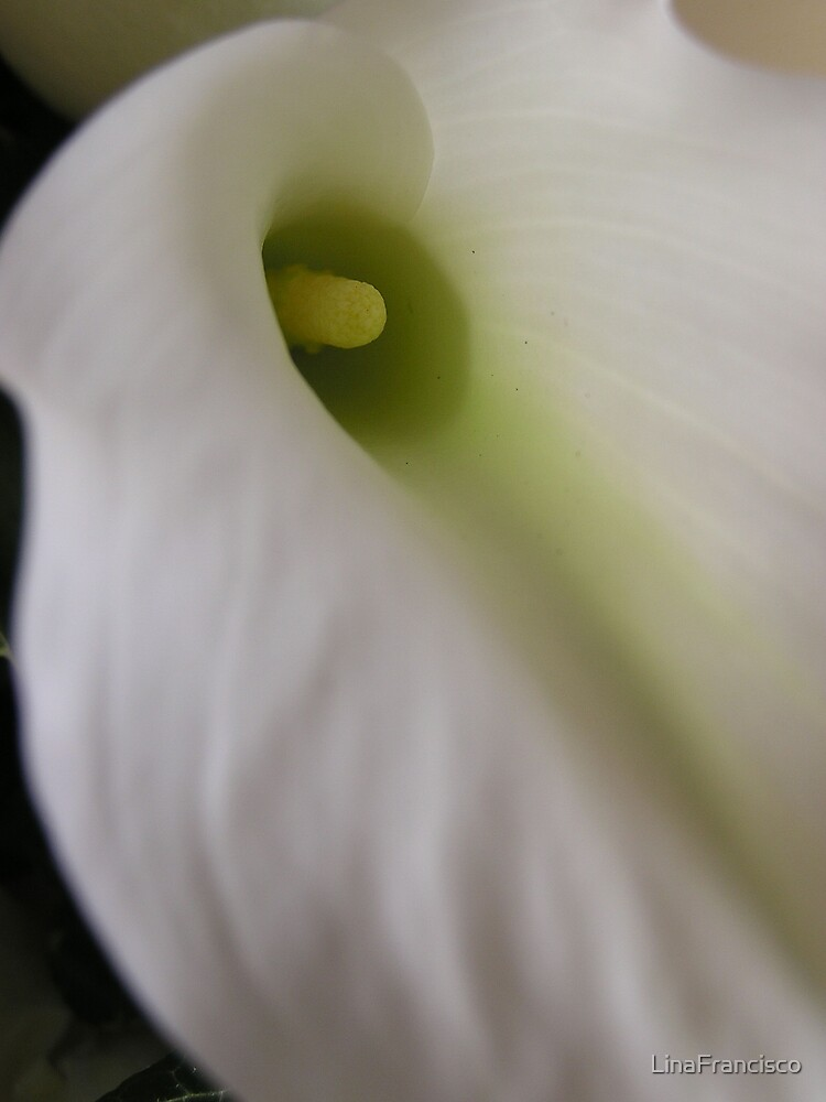 Calla Lily by LinaFrancisco