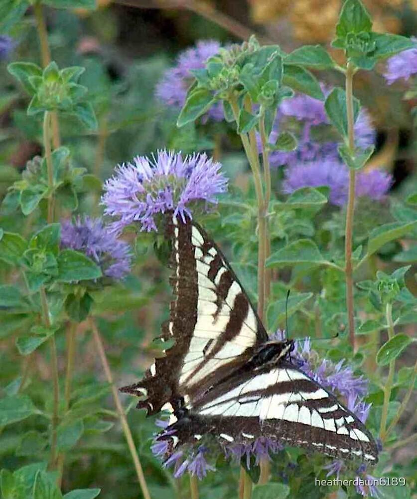 Butterflys by heatherdawn6189