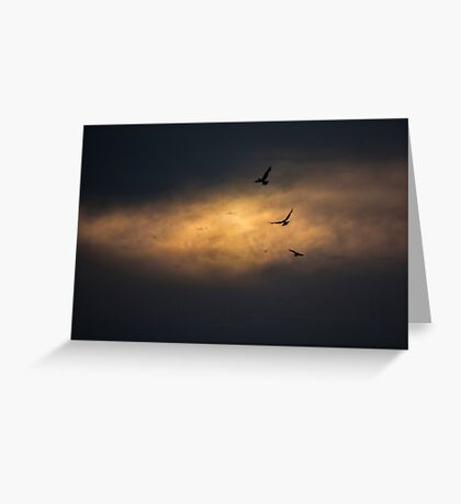 Three birds flying in the sunset Greeting Card