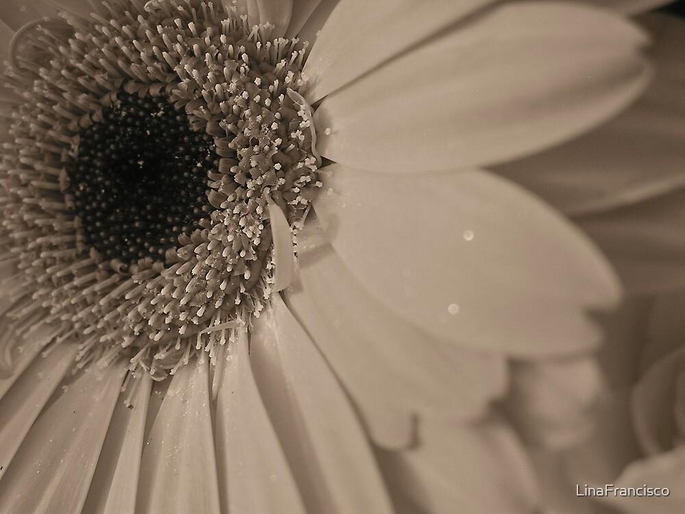 Gerber Daisy by LinaFrancisco
