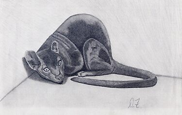 cat (pencil) by Deborah Duvall