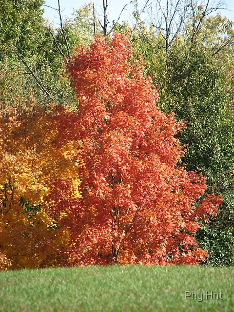 Autumn Tree Color by PhylHnt