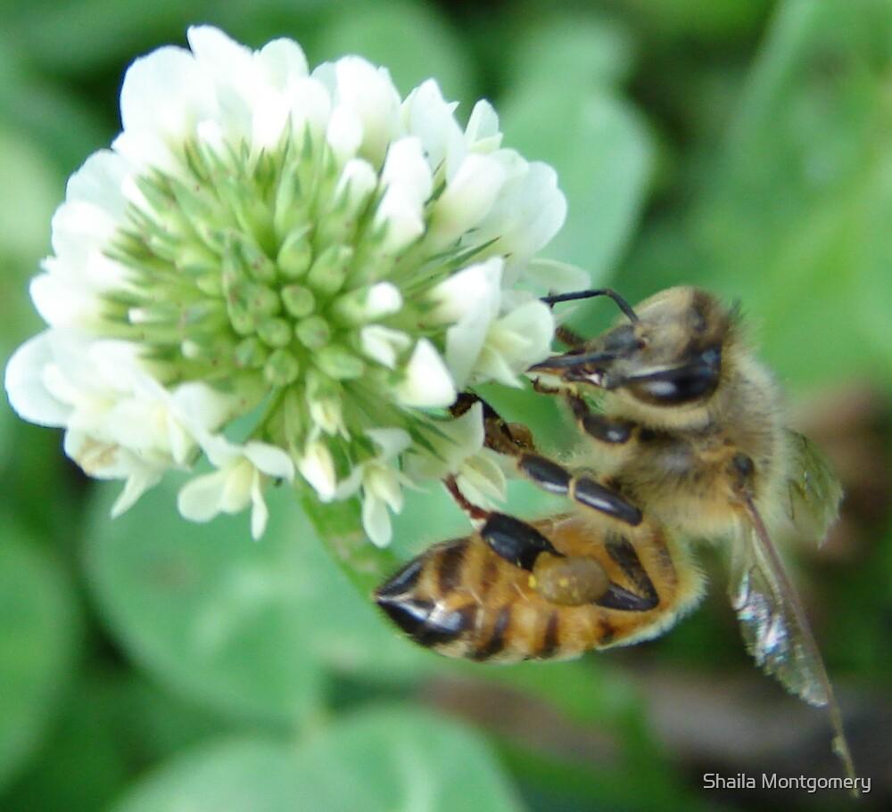 Bee by Shaila Montgomery