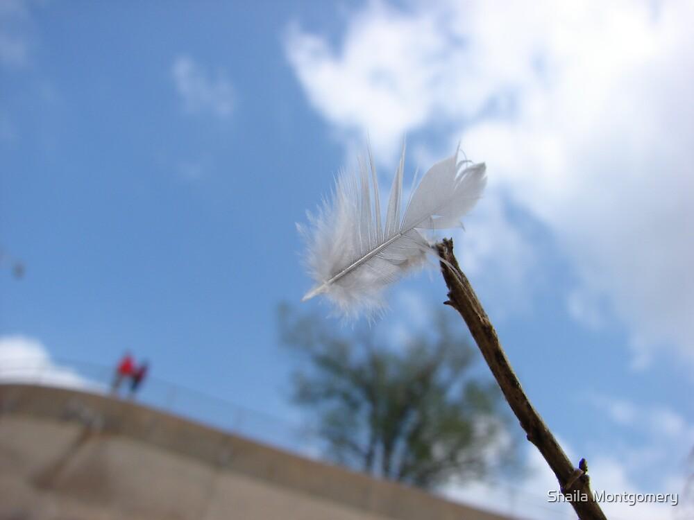 feather by Shaila Montgomery