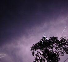 storm by Shaila Montgomery