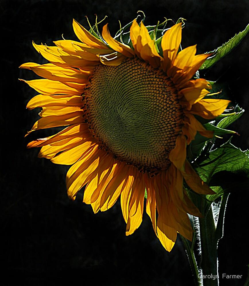 Soaking in the Sun by Carolyn  Farmer