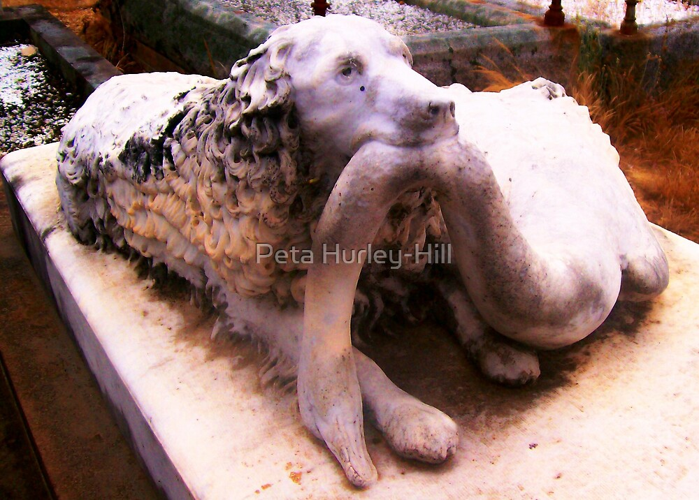 Faithful Friend by Peta Hurley-Hill