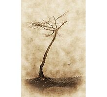 Tree and Duck Photographic Print