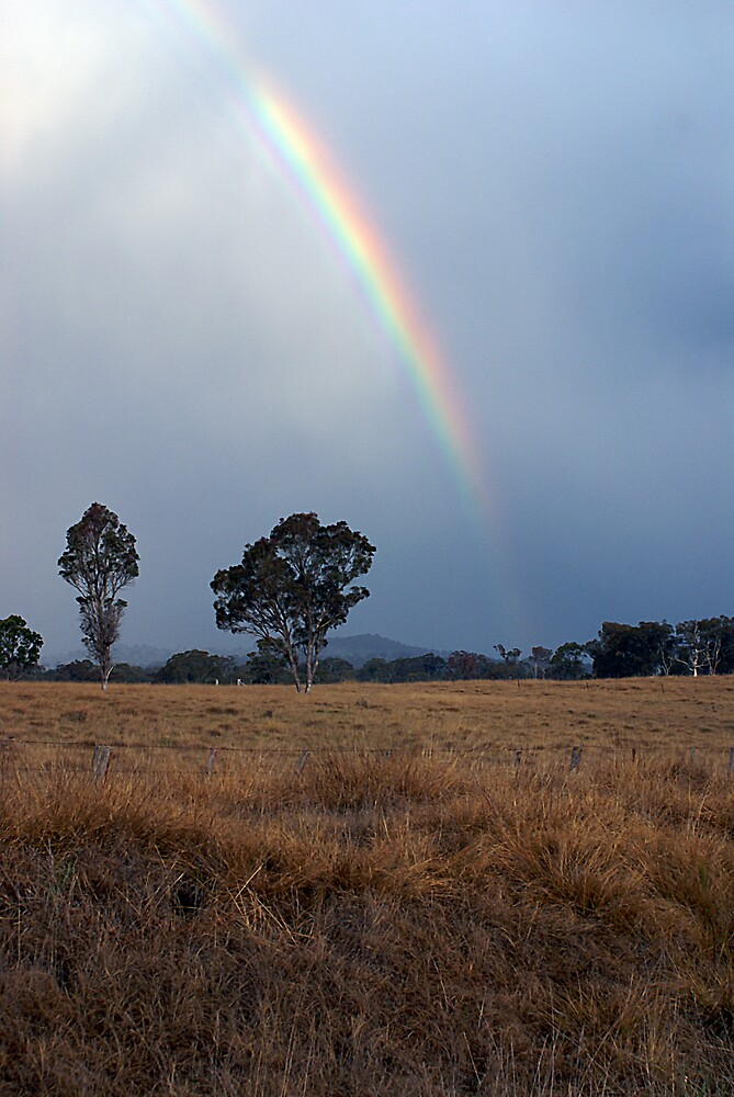 Rainbow by Steve Broadley