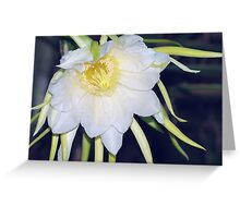 Red Dragon-Fruit Flower Bloom Greeting Card