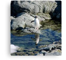 Reflecting Penguin Canvas Print