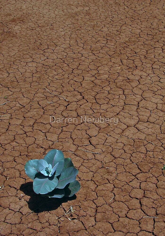 Desert Life by Darren Newbery