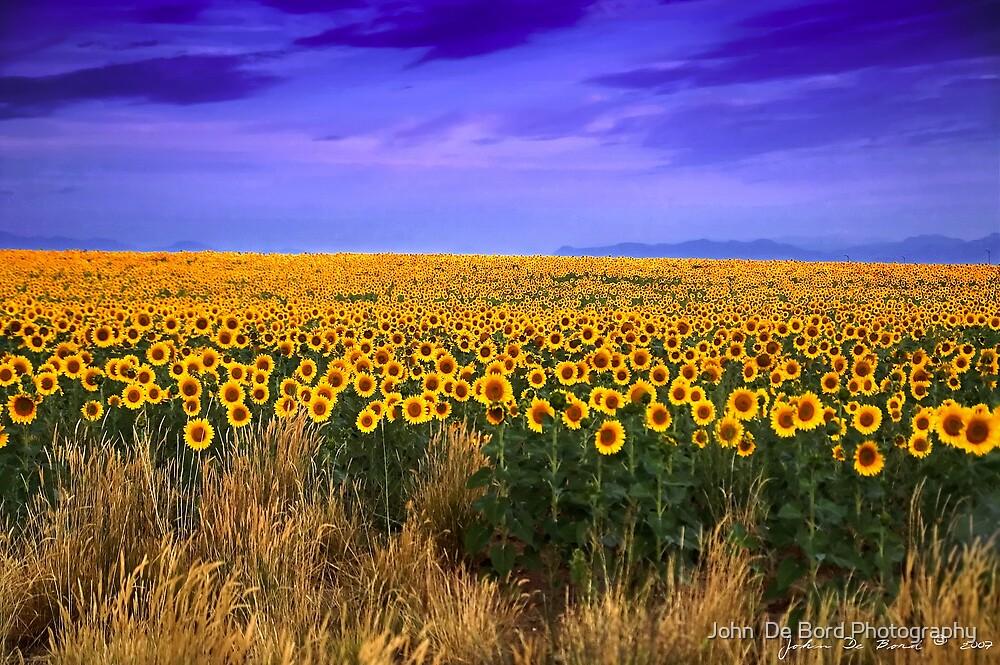 Sunflowers of Dusk by John  De Bord Photography