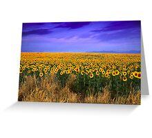Sunflowers of Dusk Greeting Card
