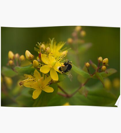 The Bumble Bee Poster