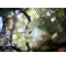 abandoned web Photographic Print