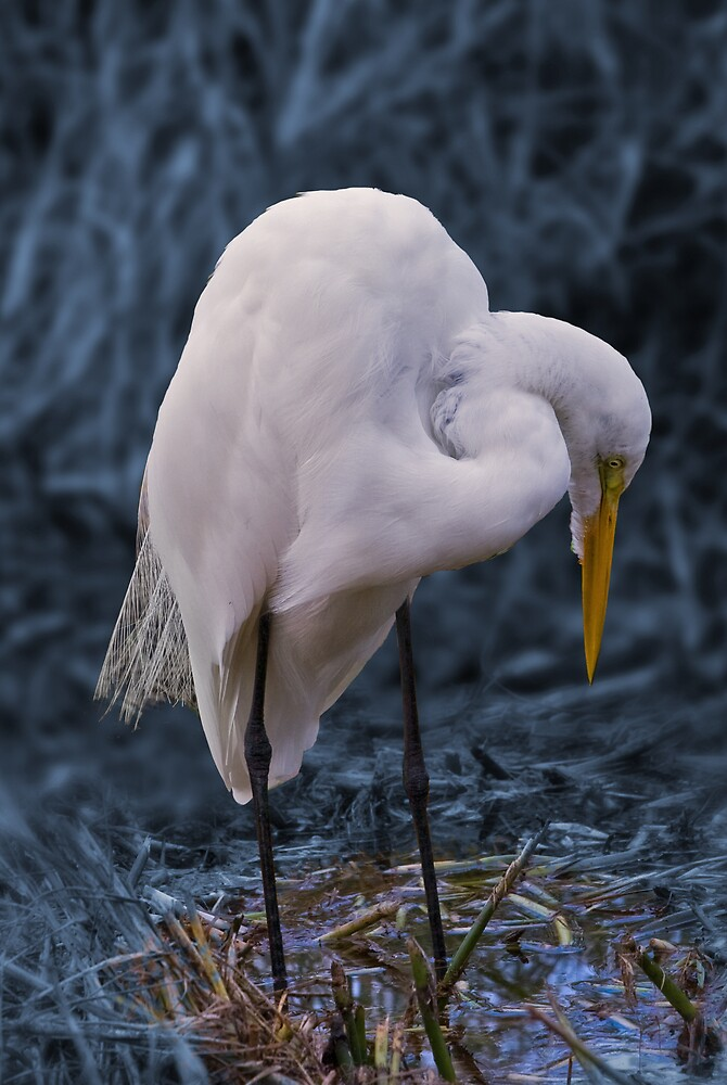Great Egret in Concentration by Delores Knowles