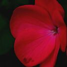 simply red by mickeyb