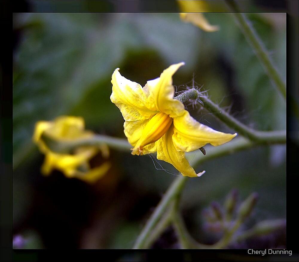 Little yellow flower by Cheryl Dunning