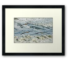 The Pelican Brief Framed Print