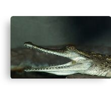 Very toothy. Canvas Print