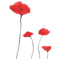 Red poppies by bardenne