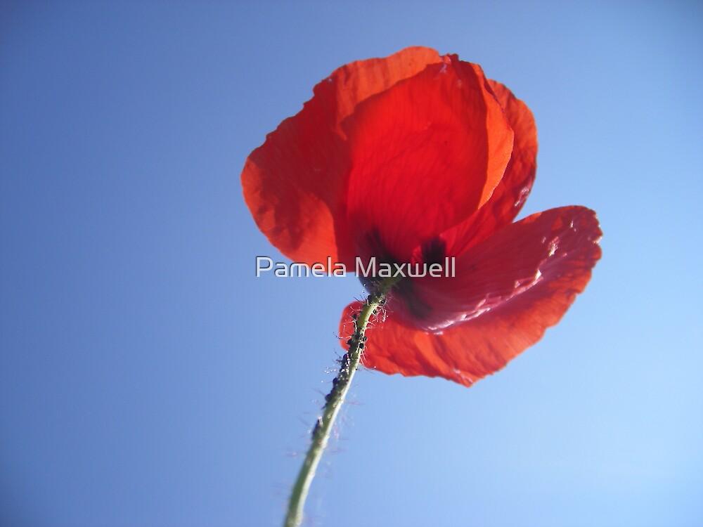 Poppy in the Sky by Pamela Maxwell
