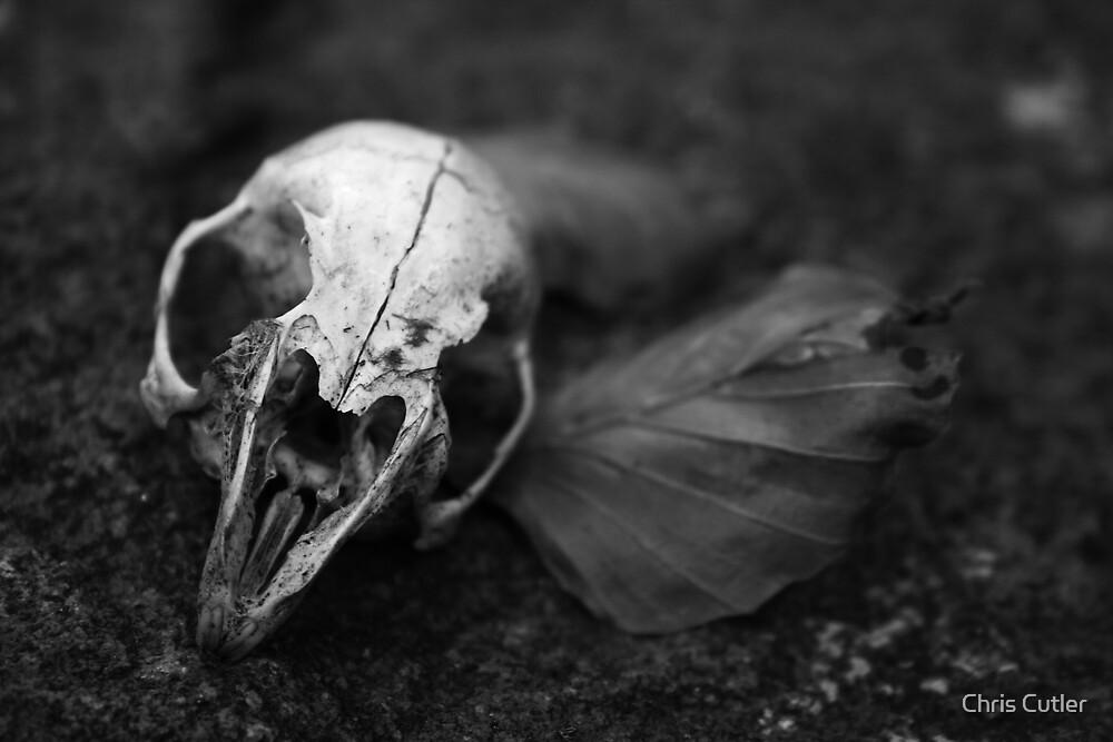 Skull by Chris Cutler