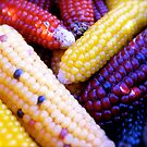 Festival Corn by Pamela McAdams
