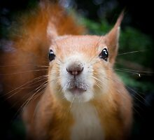 Squirrel all up in your face by Anthony Brewer