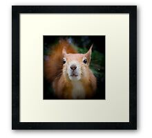 Squirrel all up in your face Framed Print