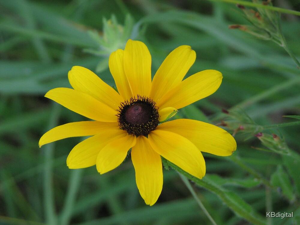 Sunflower by KBdigital