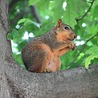 Squirrel by KBdigital