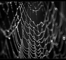 The Web by tonilouise