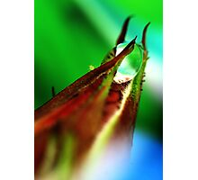 aphid and drop Photographic Print