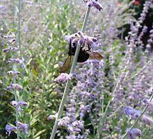 bee by caron warner