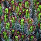 Cactus cluster by Eyal Nahmias