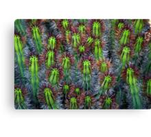 Cactus cluster Canvas Print