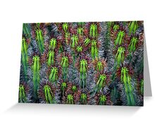 Cactus cluster Greeting Card