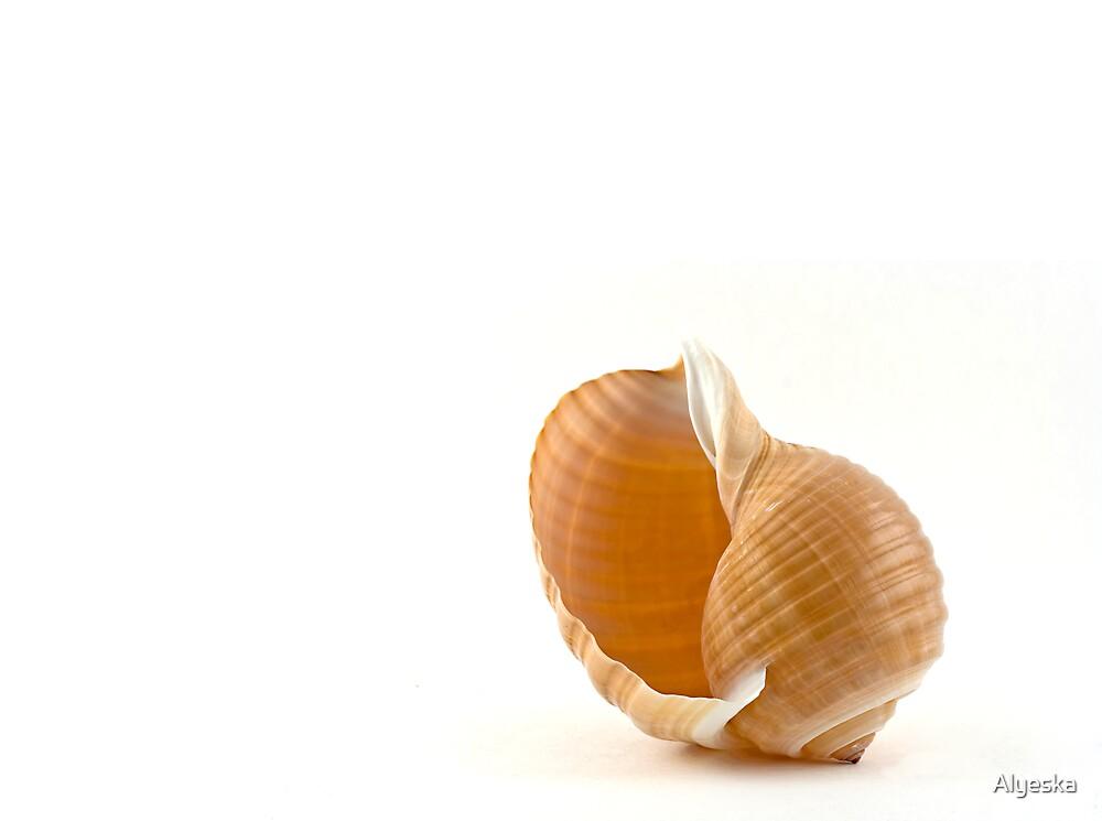 Seashell by Alyeska
