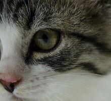 Close up  by Nicole  Markmann Nelson