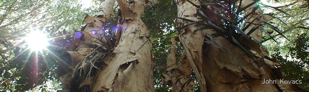 Rainforest tree by John  Kovacs