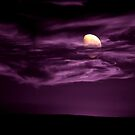 Purple moon wanted by snowbird