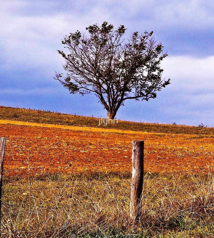 Lone Tree by jlynn
