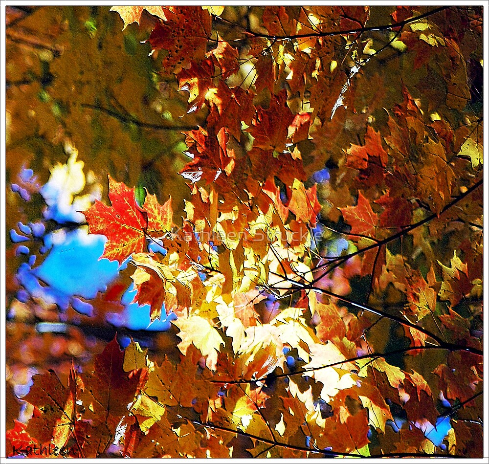 Fall Leaves by Kathleen Struckle