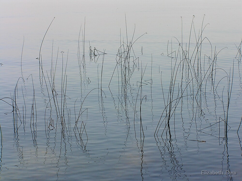 Tranquillity by Elizabeth  Dew