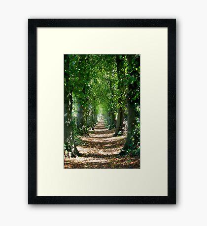 Tree Lined Path Framed Print